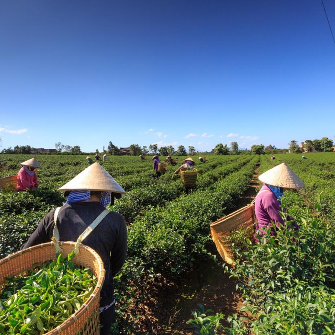 Nos thés de collection haut de gamme, sont certifié par l'Ethical tea Partnership.