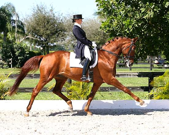 WILD DANCE - HANOVERIAN REFERENCE SIRE