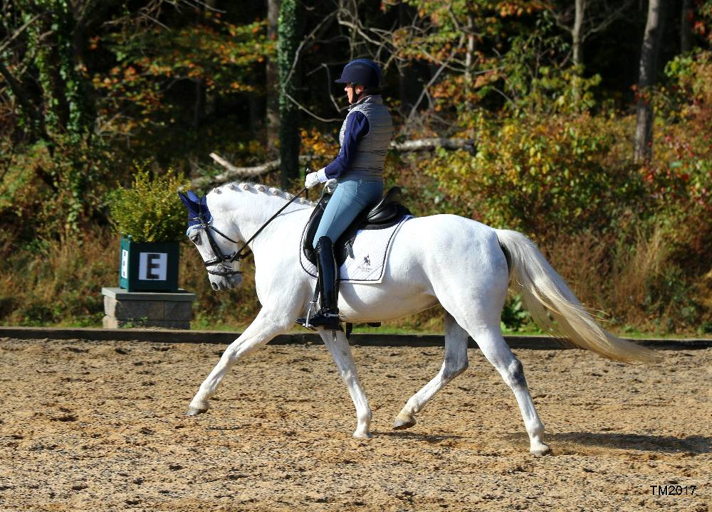 Felicity FLF- Warmblood Sport Pony by Le Andros