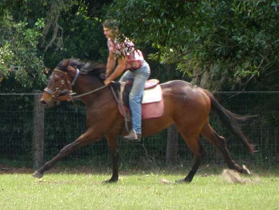 GIACASYN-THOROUGHBRED MARE BY GIACOMO OUT OF SYNFULL CHARMER BY WILD SYN-IN FOAL TO RIDE ON CURLIN