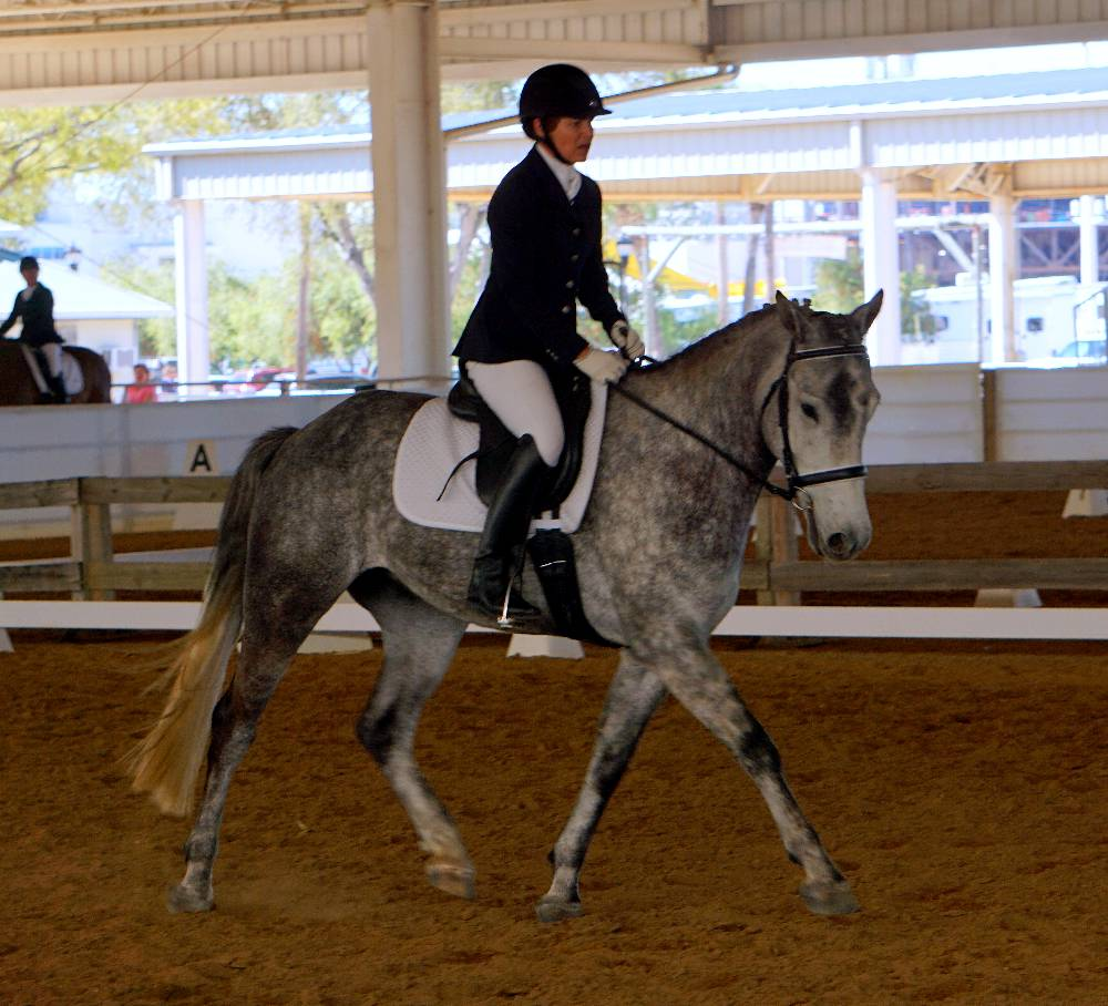 L'EXCALIBUR FLF-WARMBLOOD GELDING BY LE ANDROS (LE SANTO) OUT OF FOX TROT