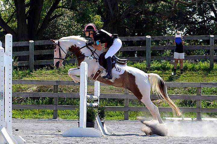 SIMPLY SANIYHA - 2010 GERMAN RIDING PONY FOR SALE BY SONNTAGSKIND OUT OF SKIPPIN JACKIE