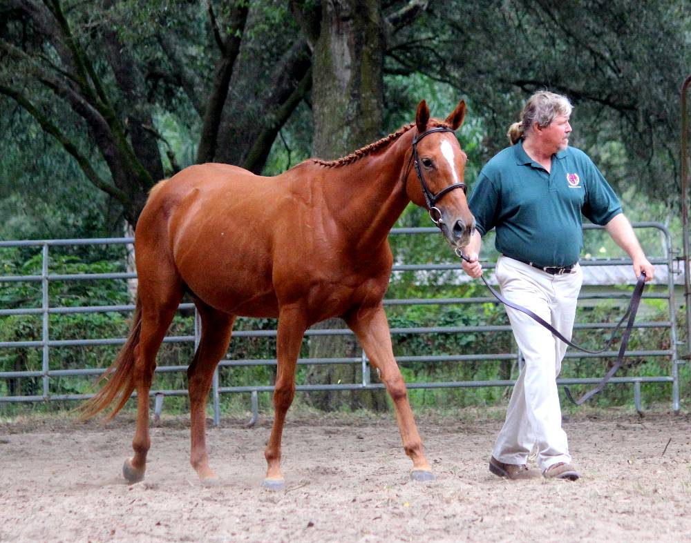 SKYROCKET ROSE - THOROUGHBRED BROODMARE BY GAFF OUT OF STAKES PRODUCING MARE SHES SILVER BY SILVER HAWK