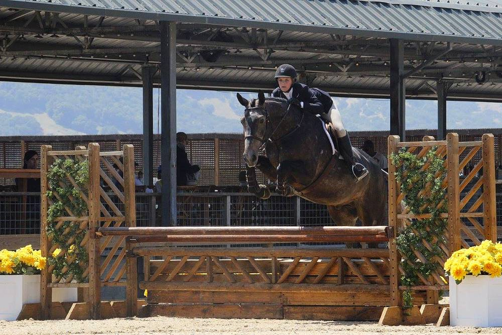 GERMAN OLDENBURG SHOW HUNTER BY BARON VAN GOGH OUT OF PASSADENA W BY POLANY