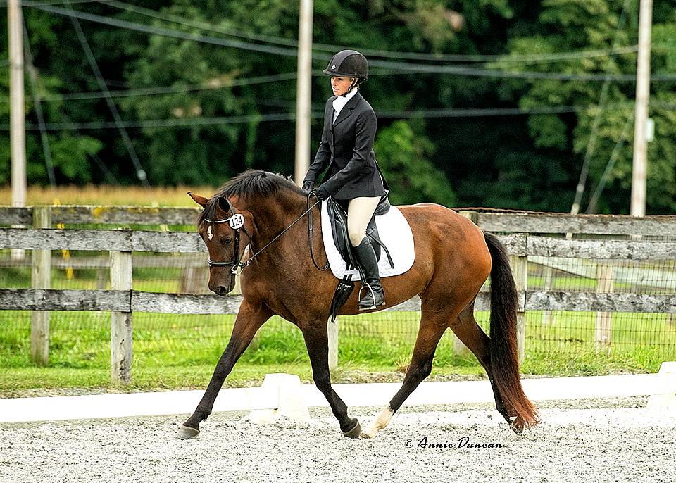 CLEANDRA FLF-WARMBLOOD MARE BY LE ANDROS OUT OF COURTASH KOTTON KANDY BY COURTASH KARNIVAL