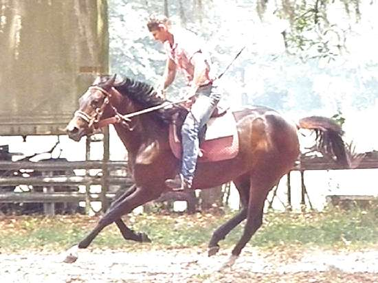 GIMME HONOR-THOROUGHBRED SPORTHORSE MARE BY GIMMEAWINK OUT OF HIGH ROYAL HONOR BY HONOR GRADES