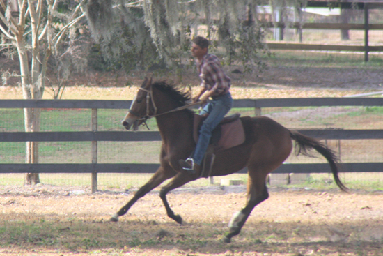 GRACED WITH POWER - THOROUGHBRED MARE BY HOLY GROUND OUT OF KEA LANI BY COUNTRY PINE