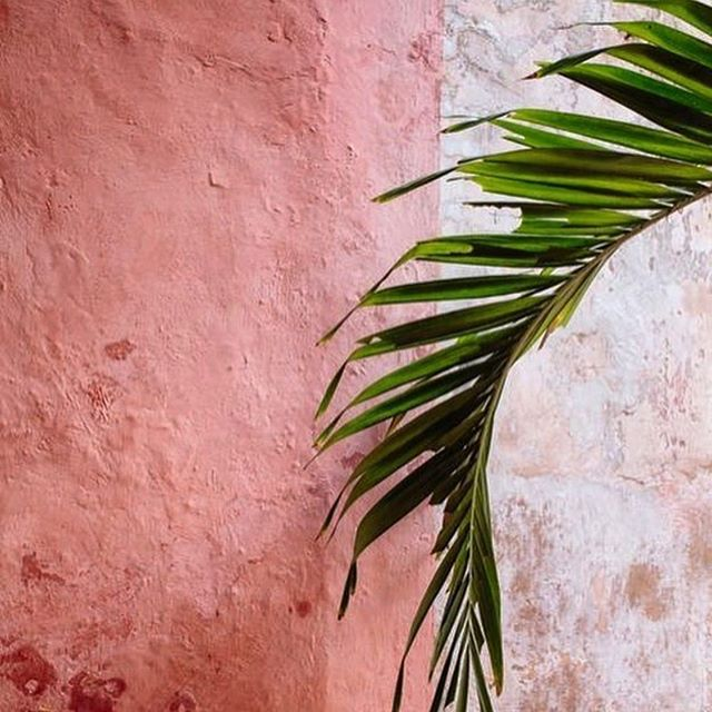 So in love lately with these marshmallow pink tones 🌸 Made even more yummy when combined with a lush tropical green. 🍃 #colorpalette #brandcolors #creativepower #conciousdesign #colorcombo #colorful