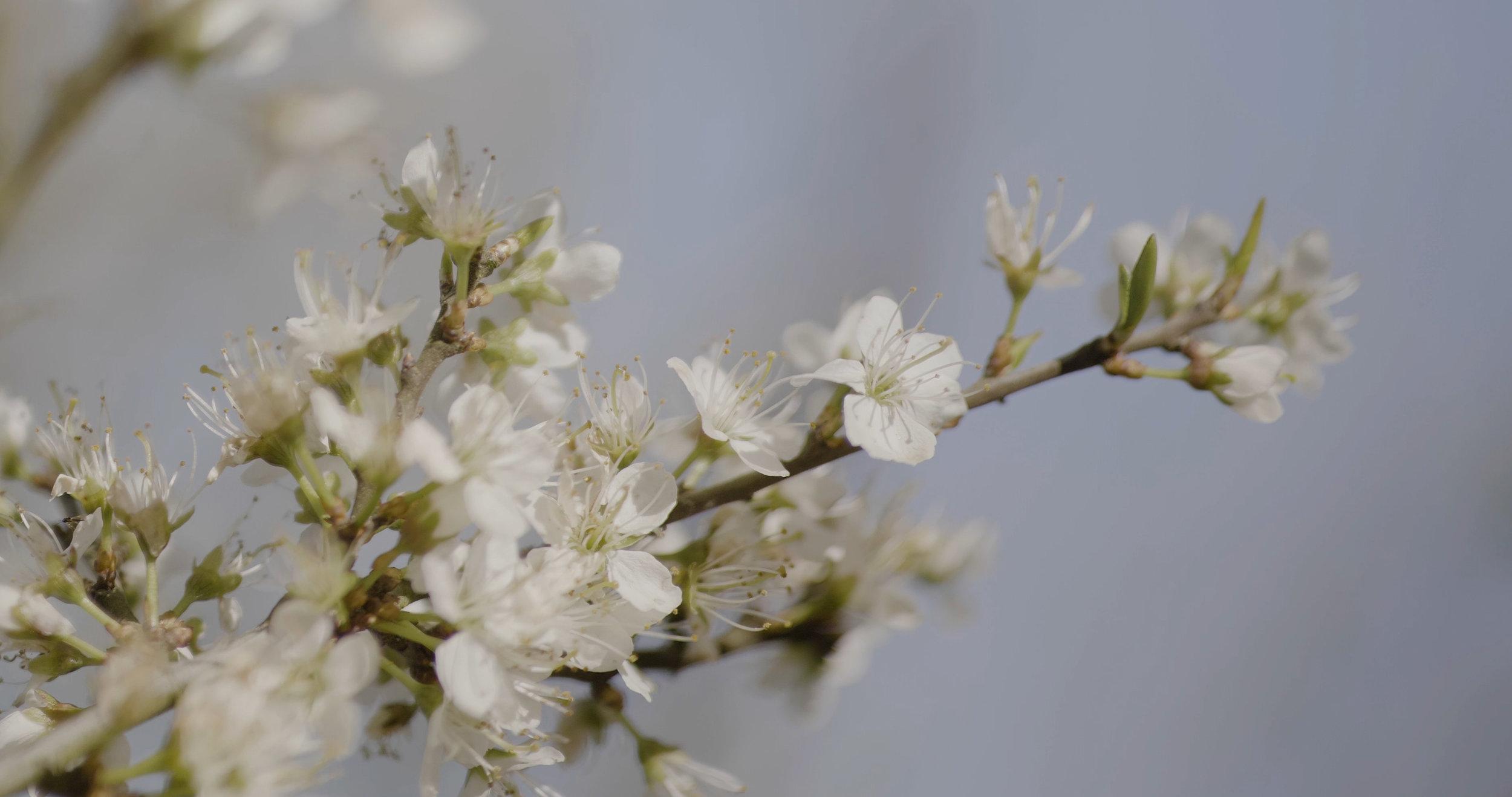 flowerplain.jpg