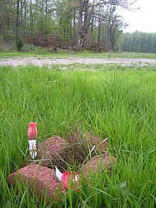 A small memorial where Shanda's body was discovered
