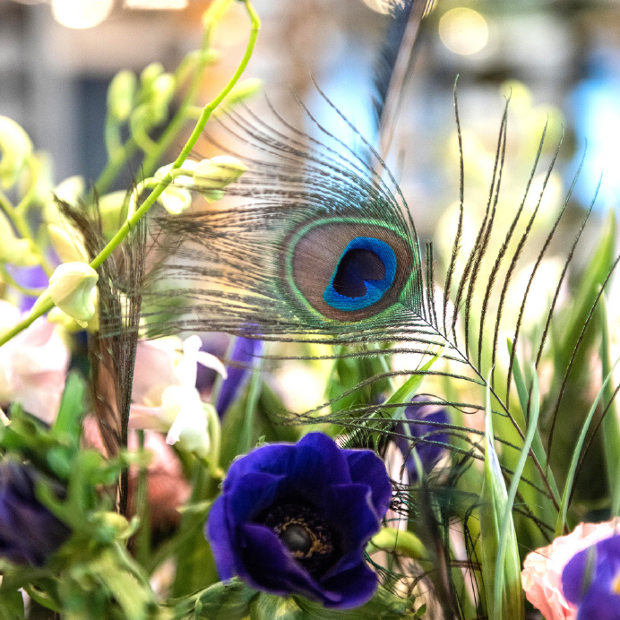 Dianthus-Yacht-Flowers-Details-3.jpg