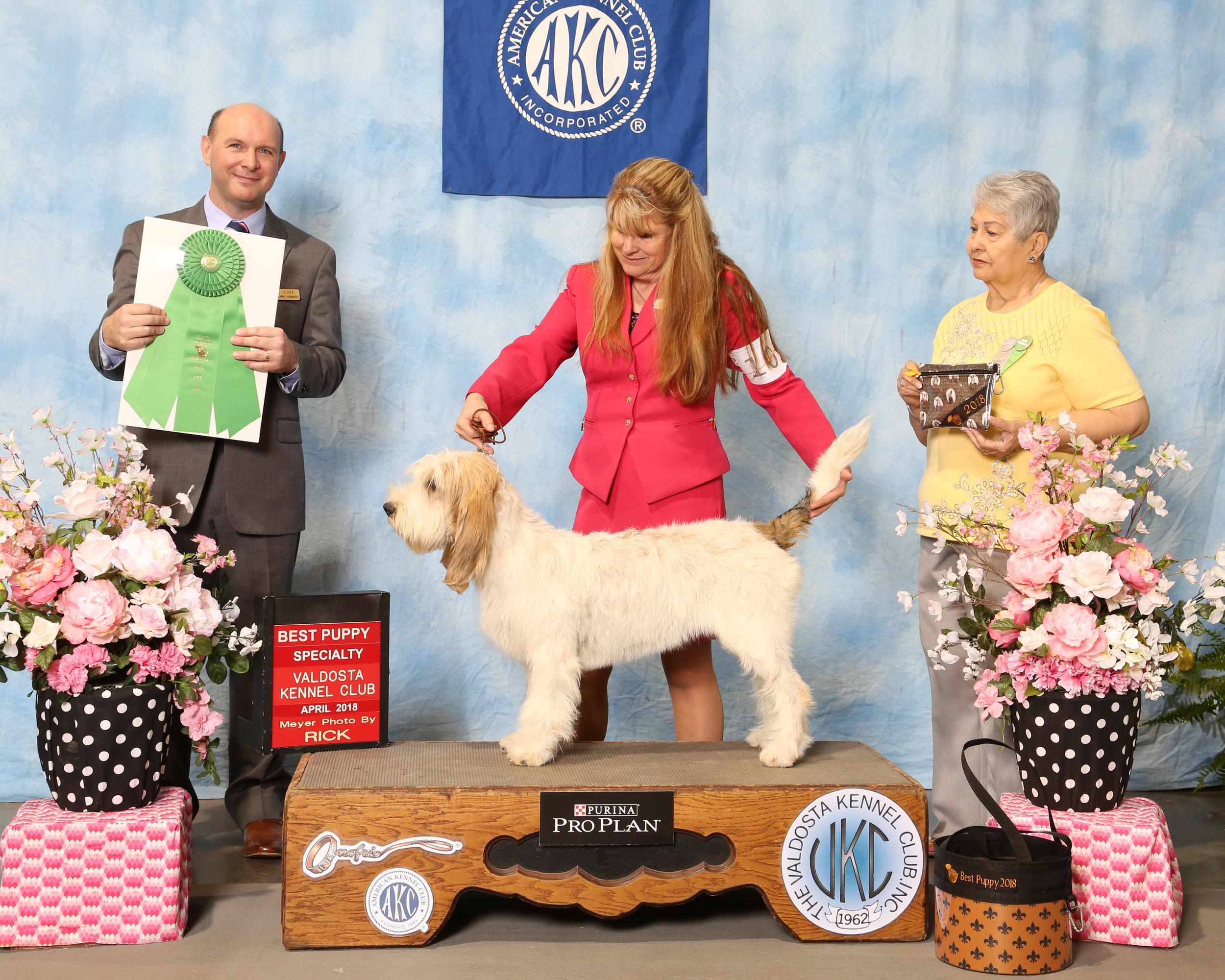 2018 GBGVCA National Best Puppy.jpg.pdf.JPG