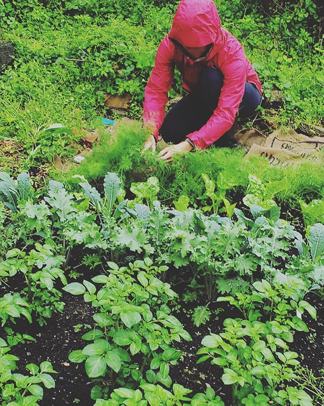 Inside is not the place to be on a rainy day 🤗 My garden is loving this weather and blessing me with some fresh dill to take home and a few big leaves of kale. ⠀ Remember your human mother and also your Earth mother today ❤️ Get outside and thank her 🌱