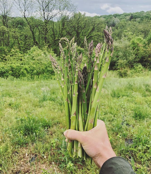 "I've learned so much in the short time that I've been working on a farm. I thought that growing food would be a difficult process, in which you had to get the timing perfectly right, and even if you did, then you're just praying fervently that the plants actually grow and become healthy and don't get eaten by other critters. ⠀ I'm happy that this isn't the case 😂I'm not saying that it's easy and that there aren't any pitfalls, but it's way more...intuitive and simple than I expected.  Each plant has taught me about the conditions that it prefers, the time of year that it grows best, and how to best protect it from animals. But I'm grasping the process quite well and feel that I'll be in a great place to be able to start growing our own food when we move 🌱 ⠀ Another thing that I'm learning on a deeper level is how to eat with the seasons; with what the Earth provides at that time.  It's easy to tell people to just eat seasonally, but when you go to the grocery store (even small organic markets) and see bananas in February in Maryland, it's hard to stick to that concept, and hard to comprehend what the land is trying to tell you. ⠀ Being an intrinsic part of growing these foods makes this wisdom so much easier to understand and apply. In a little while, I'll be eating a lot more fruit. Toward the fall, I'll be eating more starchy carbs like sweet potatoes and squash and storing them for the winter.  Throughout the winter, I'll eat more meat and fat. Currently, there's a lot of greens in my diet, and animals, too, as they're also enjoying the fresh growth and getting fatter.  Perhaps during the summer and into the fall, I'll be relying more on the plant foods that will be abundant, before turning back to more animal foods later in the year. ⠀ This cyclical pattern of eating is important for health and the restoration of our land and planet to eat in a way that the local land provides. Many indigenous people called this the ""hoop of life"": how the surrounding area can provide for all of one's needs. How amazing is that, knowing that this system of sending foods around the world isn't necessary, and we can live abundantly by that which nature provides right here?"