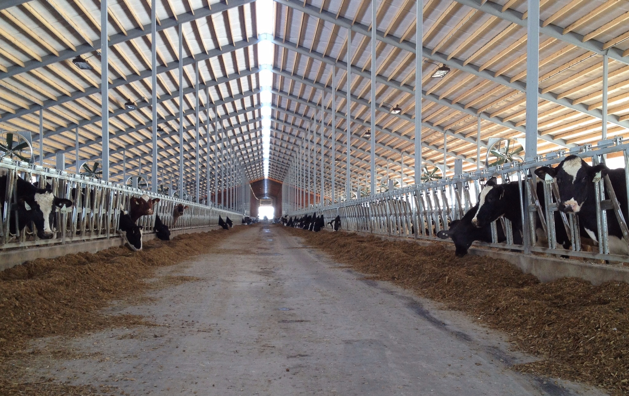 CHRISTIAN HILL DAIRY FREESTALL AND PARLOR EXPANSION - DE PERE, WI