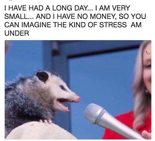 Have you ever related to a possum so much?? . . . . #wdaftPodcast #Podcast #WereSoCool #WakeMeUpWhenSeptemberEnds #WeDidntAskForThis #LifeAdventures #LiveYourBestLife #BeKindToOthers #BeKindToYourself #MakeTheAsk #AskForWhatYouWant #SafetyFirst #Meme #Memecast
