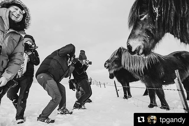 #Repost @tpgandy ・・・ 1 more #tbt from Iceland. Everyone's gotta get that Icelandic horse pic. . . . . . #iceland #cold #snow #horse #icelandichorse #documentaryphotography #documentary #document #msphotographer #thecolectivewander #nikon #24mm #icelandicpony #blackandwhite #explore #nature