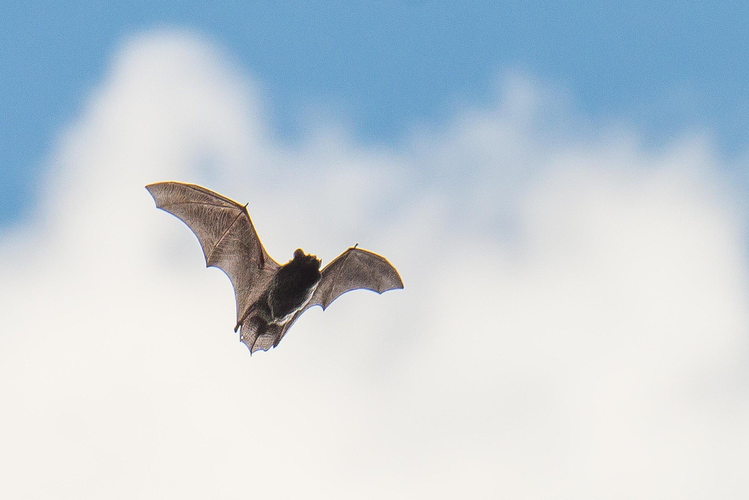 BethMathews-Bat-225.jpg