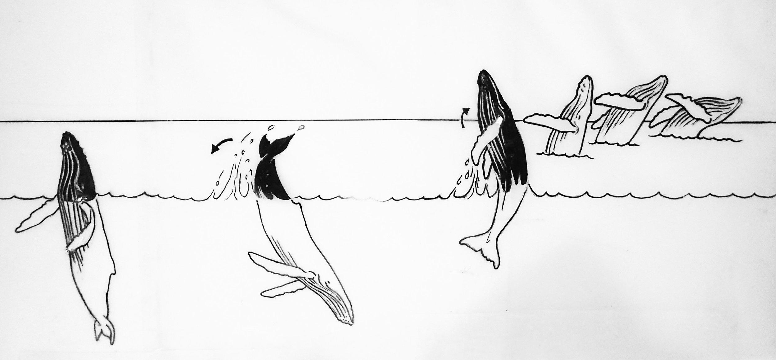 Humpback Whale Illustration Beth-Ann-Mathews-135.jpg