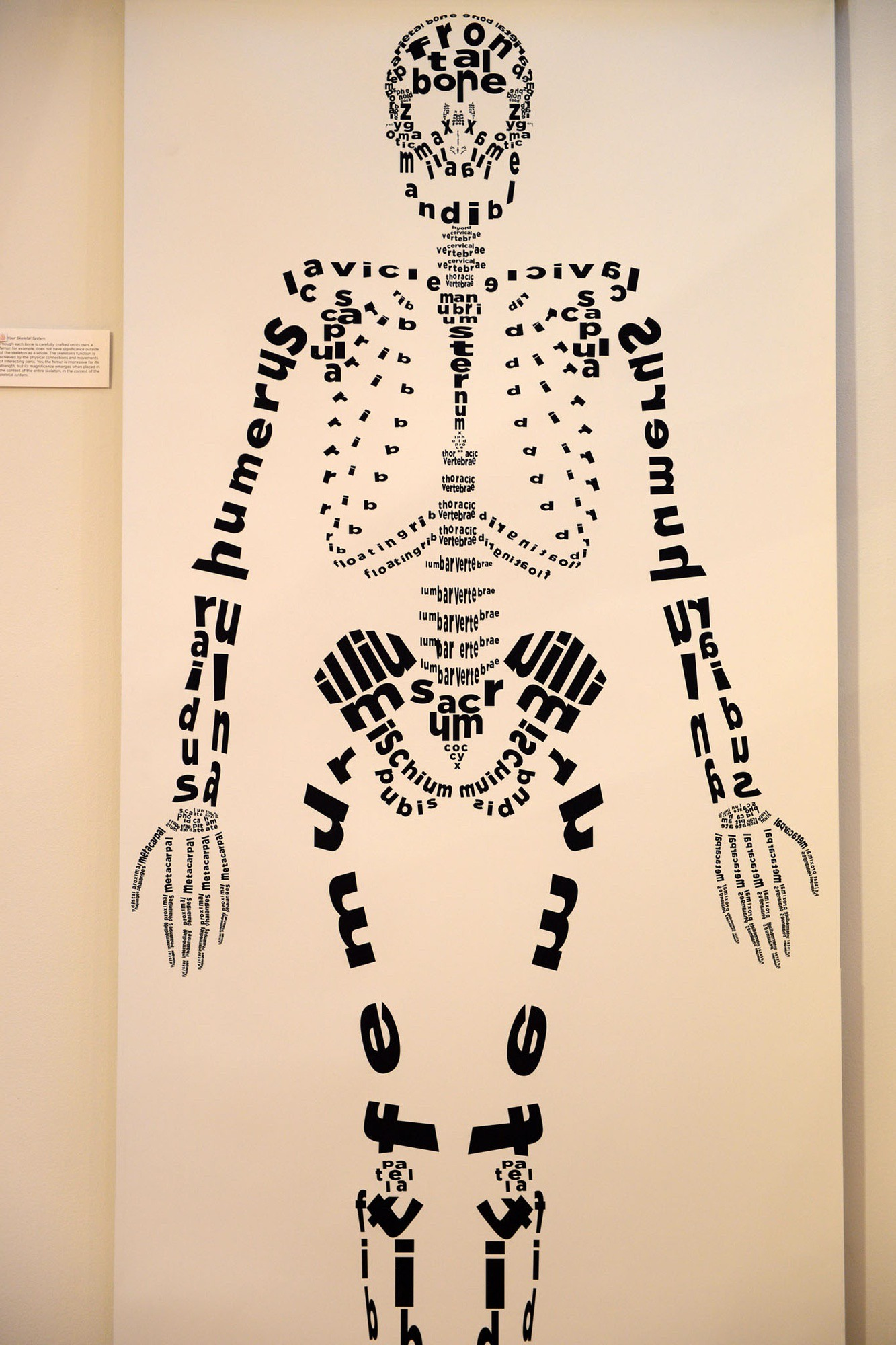 Two dimensional human skeleton made of bone names; part of a project exploring the concept of emergence—that the whole is greater than the sum of its parts