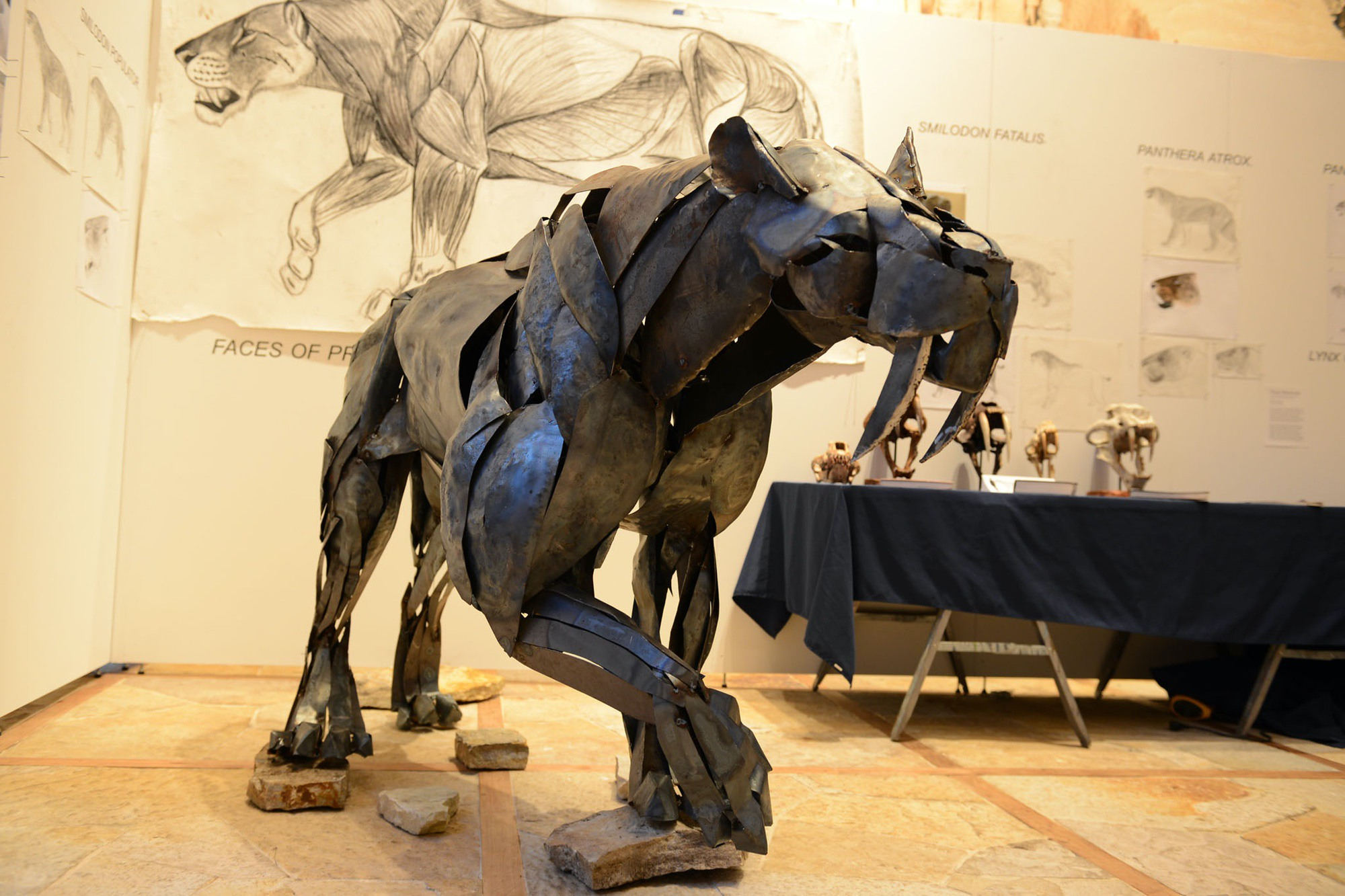 Steel sculpture showing the muscle anatomy of a giant saber-toothed cat, Smilodon Populator, by Serge Merjeevski '13