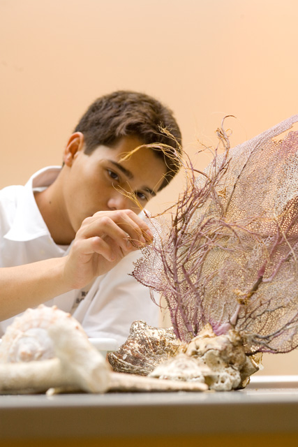 Ross Upper School student examining a piece of Alcyonacea or 'sea fan' coral.