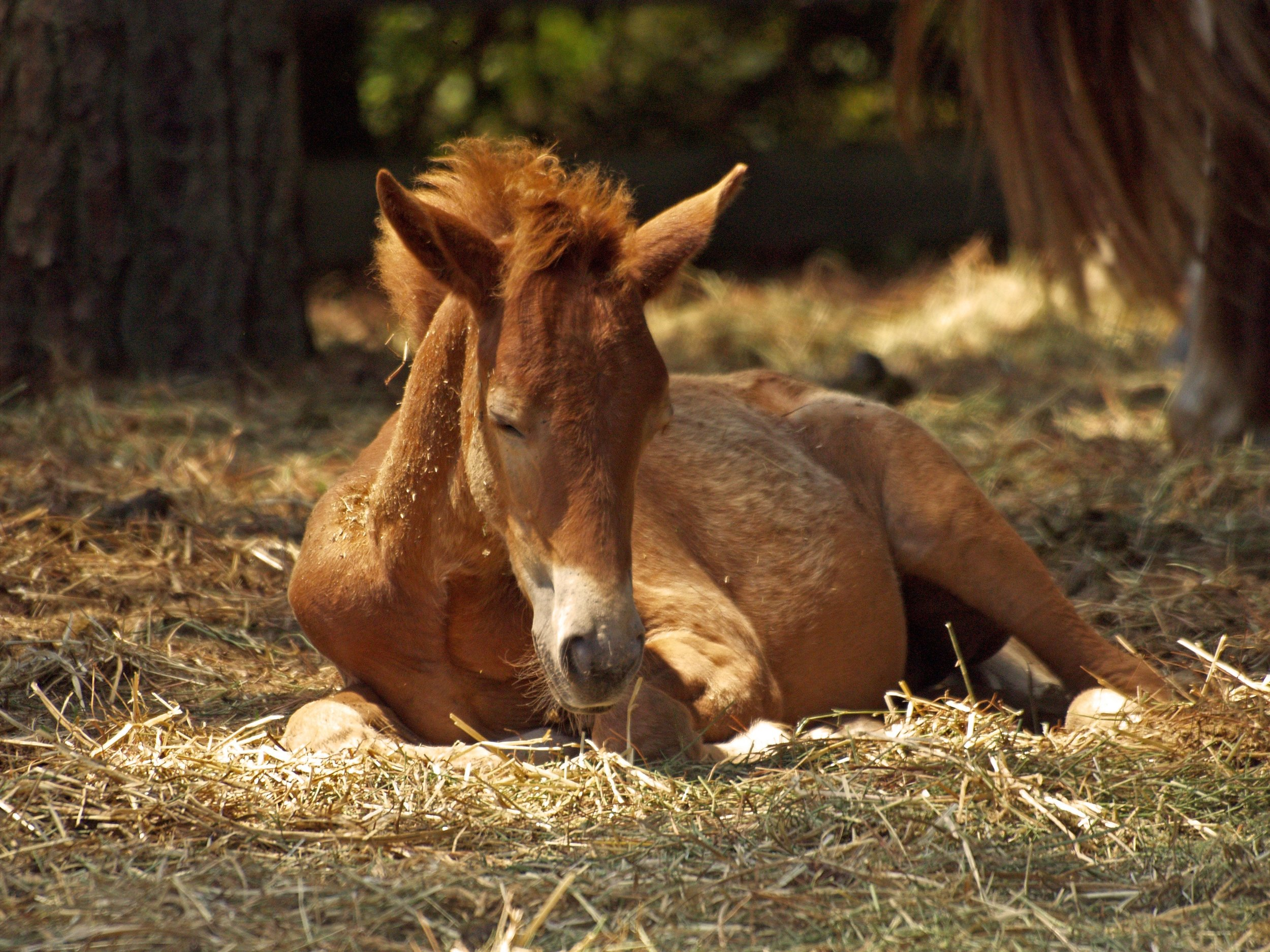 animal-farm-foal-37983.jpg