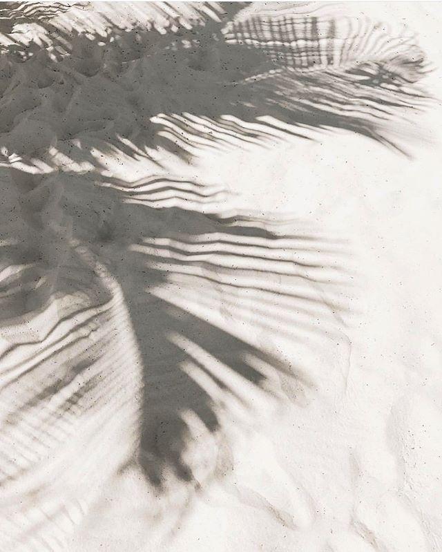 Palm shadows ✨😍 @jullie