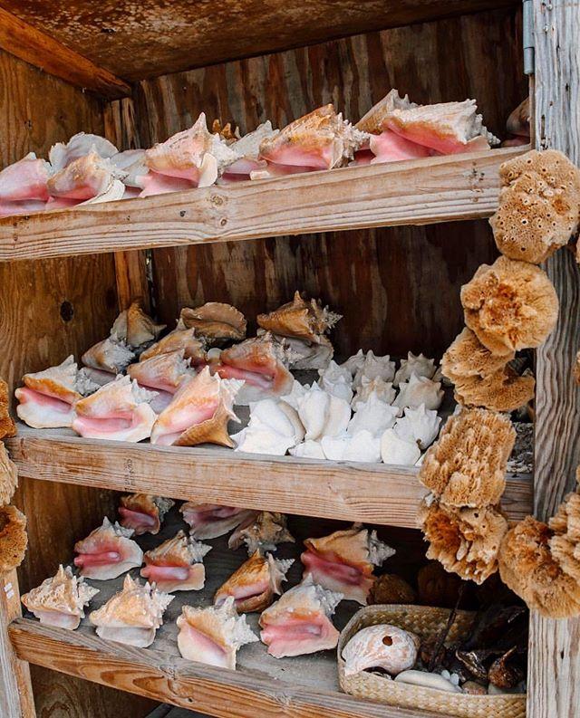 🐚 ✨ Sea shell goals
