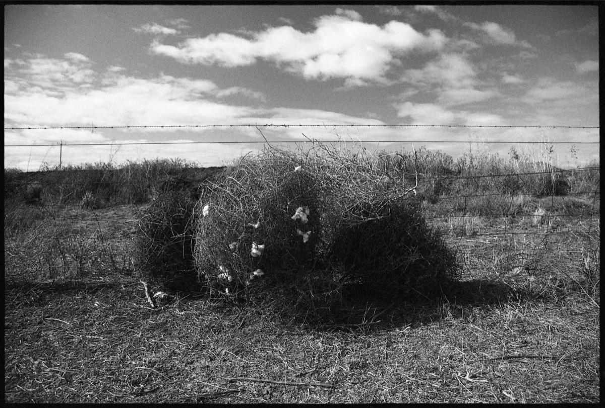 10-Hay-Griffith-18_080.jpg