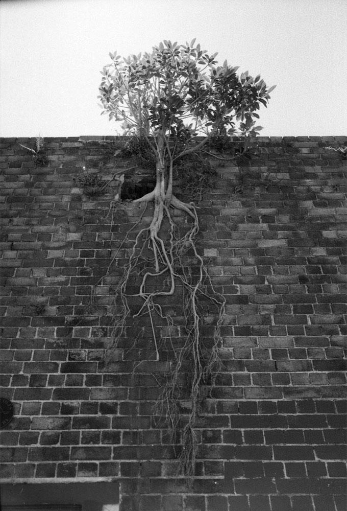 Sydney_461.jpg