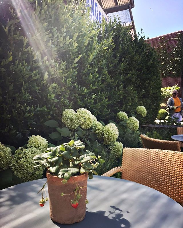 Afternoon Sun #visitnapavalley #afternoon #sunnyday #angelerestaurant #napaeats #eatersf #frenchbistro #downtownnapa #napariverfront