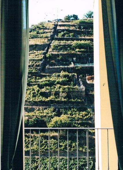 The view of the terraced vineyard from the window of our B&B (photo: Brent Petersen)