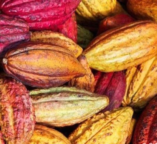 Manoa Chocolate