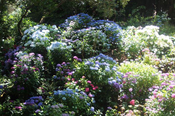 Wellington Botanic Garden (photo: Brent Petersen)