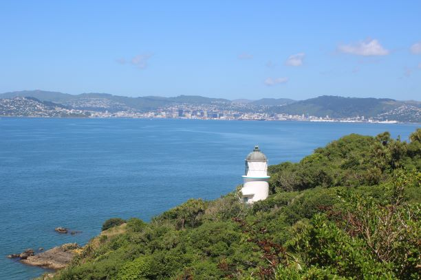 Matiu/Somes Island lighthouse and view of the harbour (photo: Brent Petersen)