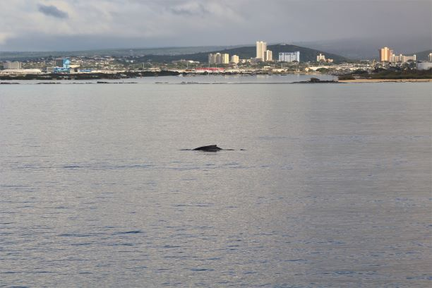 Honolulu whale watching 1.JPG