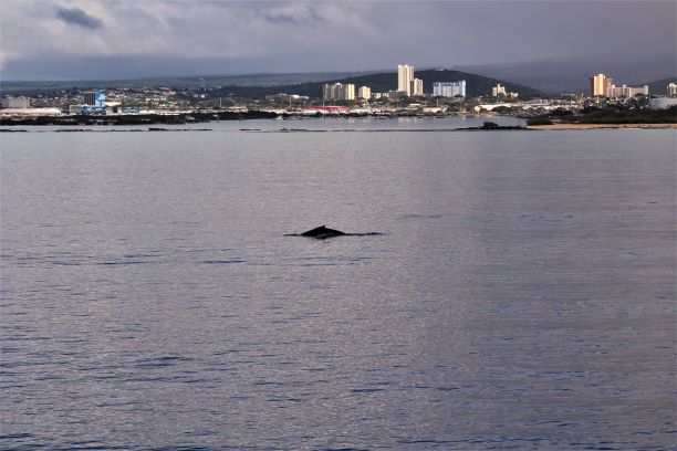 Honolulu whale watching 2.JPG