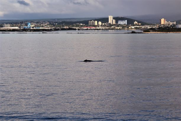 Honolulu whale watching 3.JPG