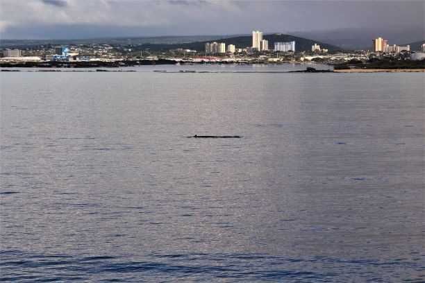 Honolulu whale watching 4.JPG