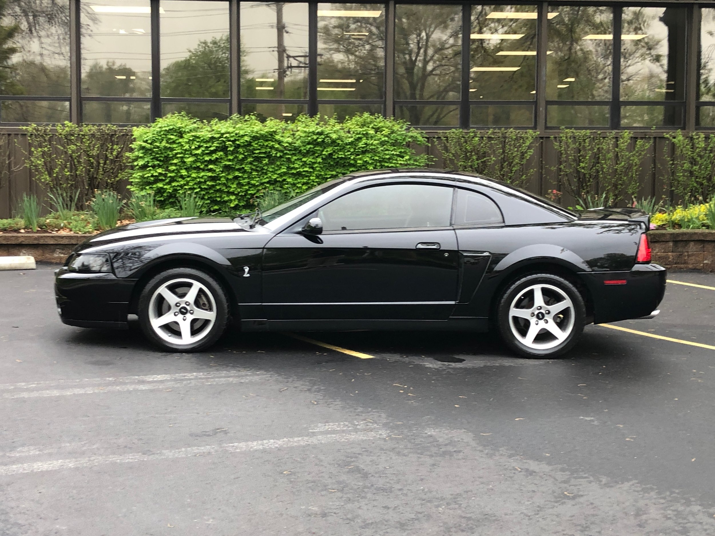 2003 Ford Mustang Svt Cobra Side