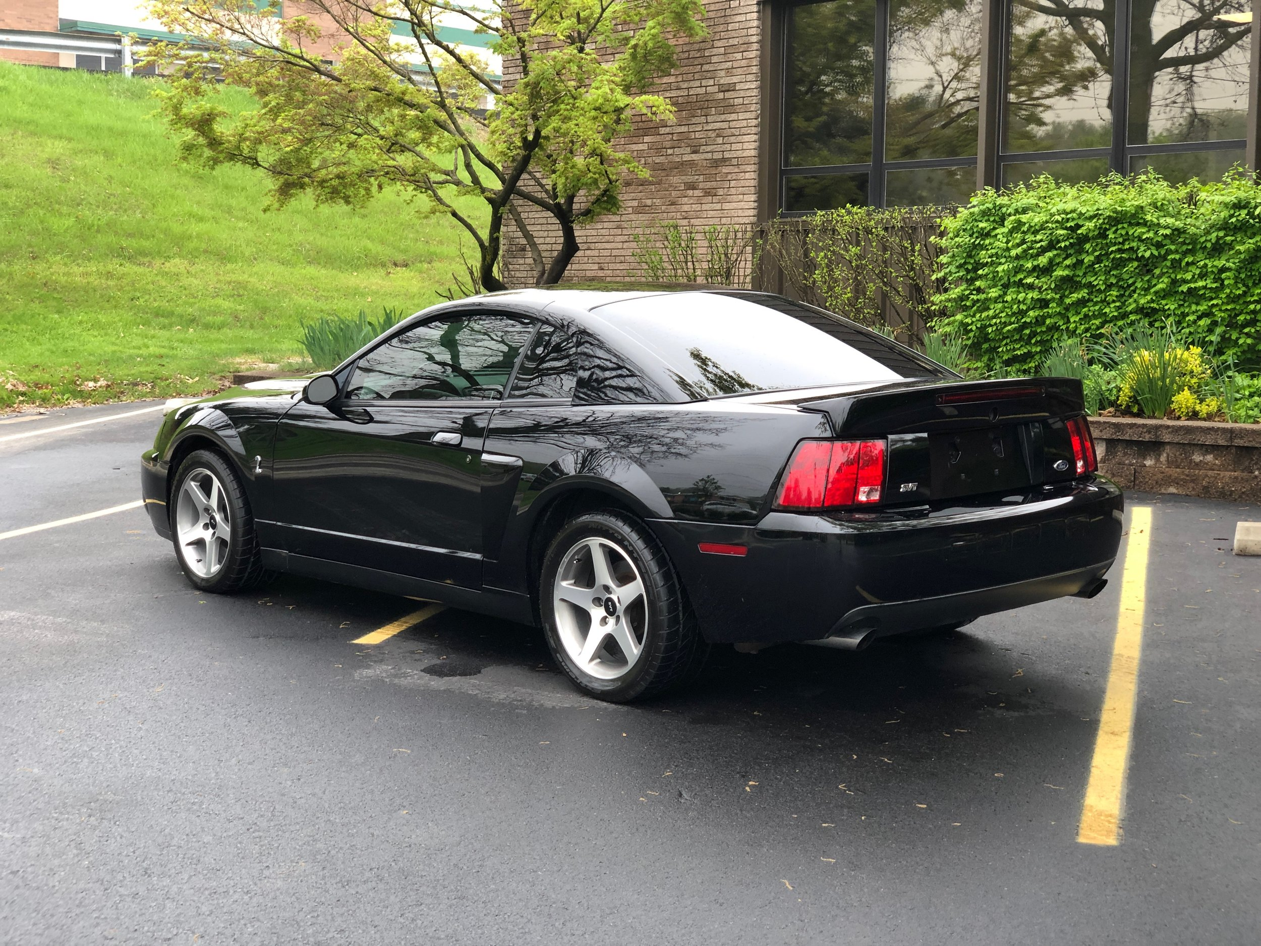 2003 Ford Mustang Svt Cobra Back Side