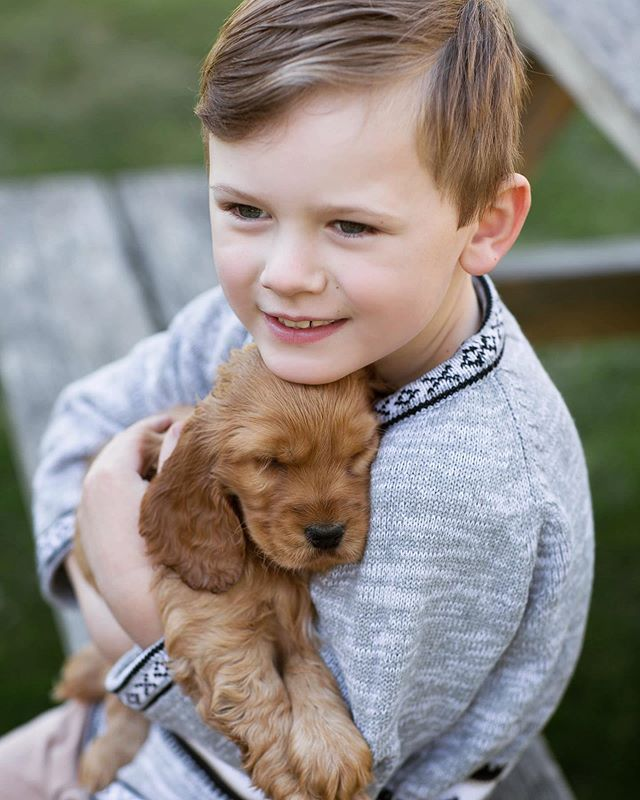 More Flo spam 🌸 #goldencockerspaniel #puppy #newbornphotography #newbornphotographer #amyalldayphotography #familyphotographer #newbornphotographermelbourne #familyphotographermelbourne #dogsofinstagram