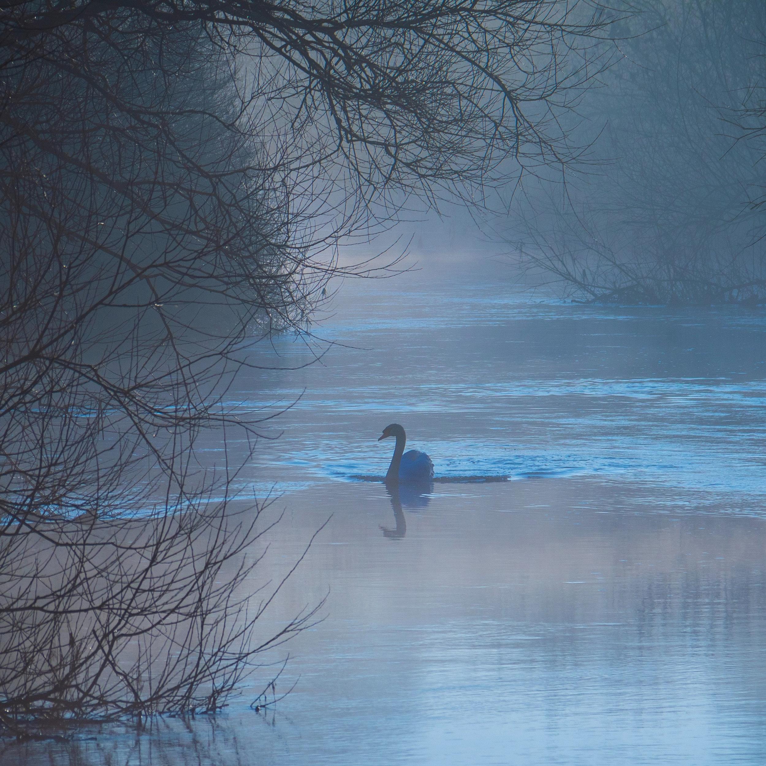 Swan is the symbol of Hamsa Yoga