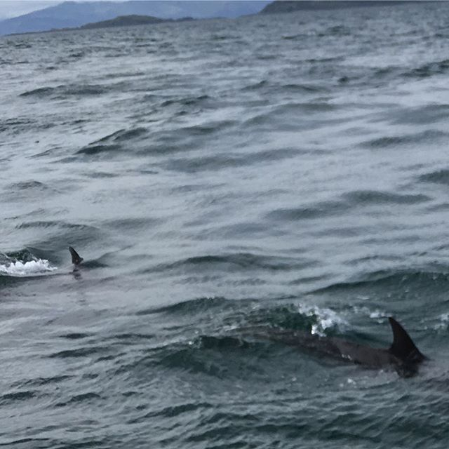 How lucky are we to see dolphins 🐬 with the fabulous and knowledgeable marine biologists David and Pauline from Sealife Adventures... Magical!  #sealifeadventures #dolphins #westcoastofscotland #wildlifescotland #outfitstylist #seilisland
