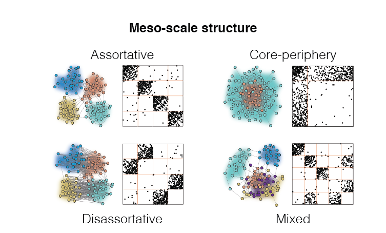 "Most real-world networks exhibit meso-scale structure meaning that their nodes and edges can be clustered into sub-networks called ""communities"". Communities interact to form different motifs, e.g. assortatively or as cores and peripheries, each suited to realize a different network function. We study meso-scale structure in biological neural networks to gain insight into their relationship with brain function. We also develop new methods for detected and characterizing meso-scale structure."