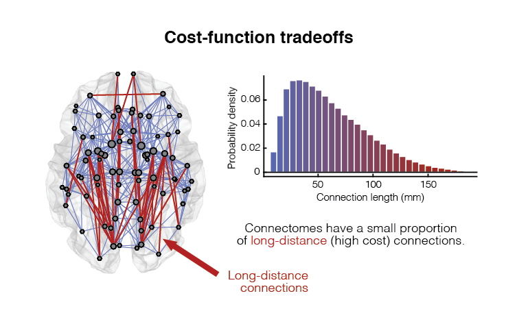 Brain networks are spatially-embedded and the formation, maintenance, and usage of their connections requires material and energy — i.e. costs. In general, longer connections are most costly than short. As a result, brain networks favor forming short-range connections. However, long-distance connections enhance network diversity and promote efficient information transfer. Therefore, brain networks must tradeoff between the formation of costly features that enhance functionality and a brain-wide drive to reduce wiring cost.