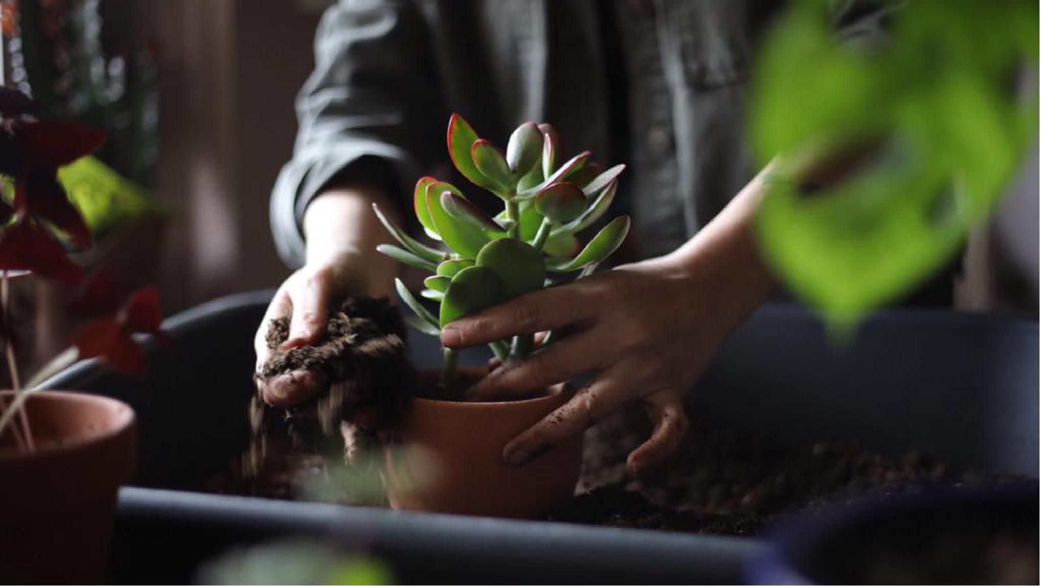 plant talks.jpg