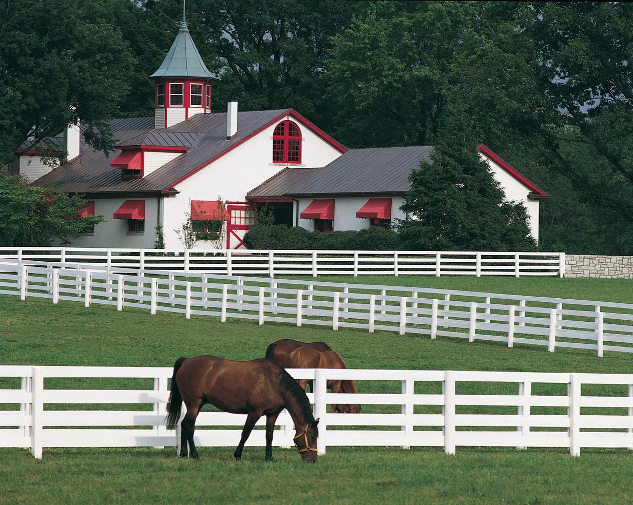 equine insurance 1.jpg