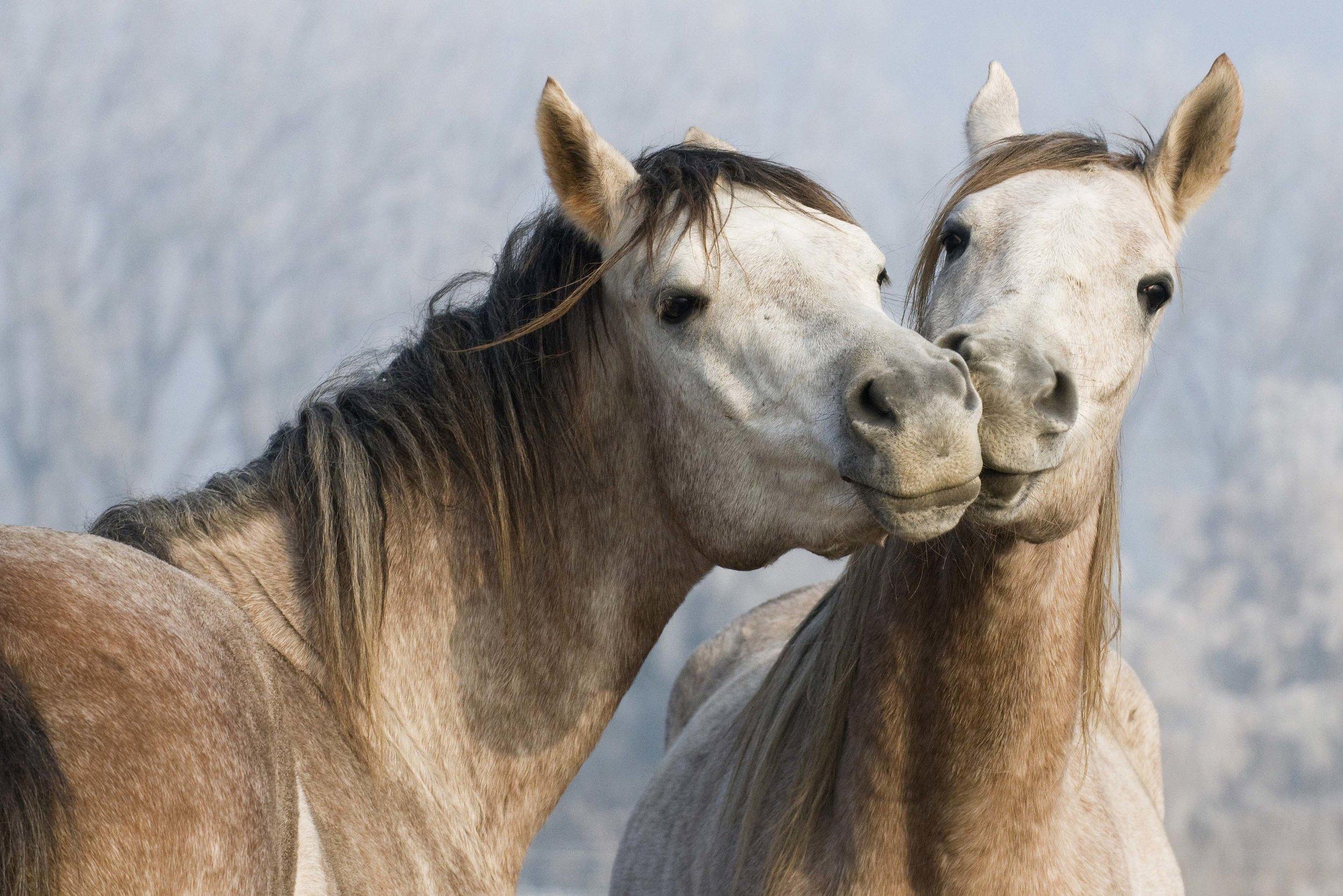 equine & equestrian insurance